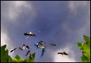 Vidéo screenshot